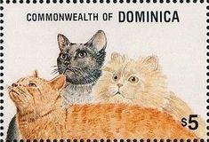 Domestic Cats (Felis silvestris catus)