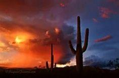 Another shot of Saguaro National Park