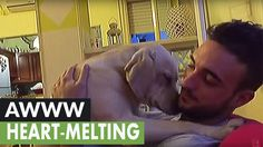 Ettore the Labrador is clearly filled with guilt and desperate to win over her owner Anthony Federica Granai. Watch as the two take part in one of the cutest...