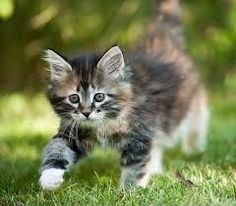 Darling Kitten Exploring the Backyard. and like OMG! get some yourself some pawtastic adorable cat apparel!