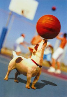It's the basketball dog!!! Awesome!!!