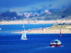 Playa, mar y fauna