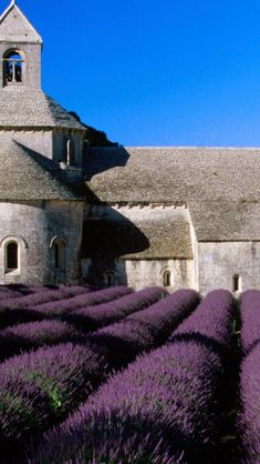 Lavender field surrounding the Abbaye de Senaque, Provence,France Places Around The World, Oh The Places You'll Go, Around The Worlds, Lavender Fields France, Provence Lavender, French Lavender, Beautiful World, Beautiful Places, Valensole