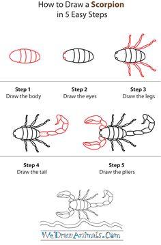 Scorpion directed draw for our Desert Habitat unit