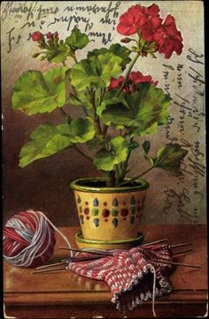 Knitting with Geranium. 1913 German postcard.