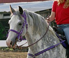 Sabino going grey, headshot  Whitehorseproductions