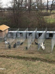 Chicken Roost, Chicken Barn, Chicken Coop Run, Chicken Cages, Chicken Feed, Backyard Poultry, Backyard Chicken Coops, Poultry House, Chickens Backyard
