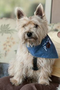 Col. Potter Cairn Rescue Network: Sunday Sweets Pokie