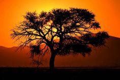 Arcacia in Sossusvlei, Namibia  - http://earth66.com/botanical/arcacia-sossusvlei-namibia/