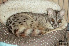 # Exotic Animals That You Could Totally Have As Pets 0