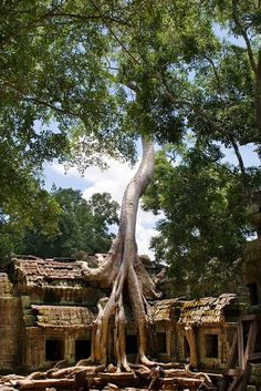 Siem Reap,Siem Reap Province,Cambogia Laos, Oh The Places You'll Go, Places Around The World, Places To Visit, Wonderful Places, Beautiful Places, Thailand, Travel Destinations, Places To Travel