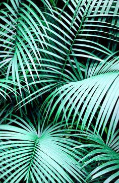 Digital Pattern by Karen Hofstetter www.society6.com/karenhofstetter