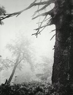 trees, forest, black and white, nature