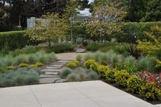 contemporary landscape by Huettl Landscape Architecture. Festuca 'Elijah blue' in foreground with Blue Oat Grass and Berkeley sedge beyond the gravel oval.