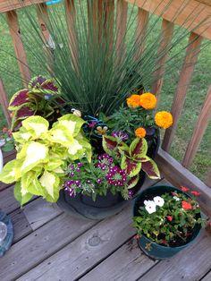 Costco P*T W Perinial Flowers My Diy Projects Plants 400 x 300
