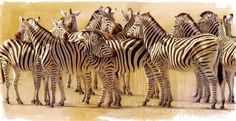 Zebra Art Print Resting Heads by Kim Donaldson by KDGartprints Wildlife Paintings, Wildlife Art, Wild Animals Videos, Zebra Art, Zebras, All Art, Illustration Art, Illustrations, Art Prints