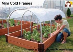 Keep your small plants out of the cold or start new plants early with our Mini Cold Frame! Provide shelter for your tender plants or harden-off seedlings. Cover is made from our 6 mil, 4 year greenhouse film that has UV-blockers, an anti-dust additive, and comes with a 4 year warranty. Fabric clips included. http://www.gothicarchgreenhouses.com/mini-greenhouse.htm