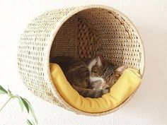 Attach a sturdy wicker basket to the wall with brackets, add scratching post and blanket for your kitty's new day-bed....  = )