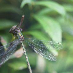 https://flic.kr/p/xTx7XX   image   Dragonfly