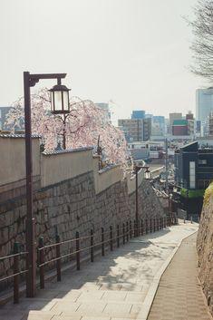 天王寺七坂の桜 - igu; Osaka
