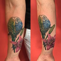 Session one on this parakeet / floral memorial piece. Still have some more detailing left on the birds and need to add another flower and some background. @aemonson #tattoosbyemi #nofilter #parakeettattoo #lilytattoo #stargazer #colortattoo #jackalopetattoo #bodymods #bodymodification #tattoo #tattooartists #ladytattooers #minneapolis