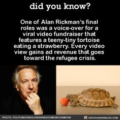 One of Alan Rickman's final roles was a voice-over for a viral video fundraiser that features a teeny-tiny tortoise eating a strawberry. Every video view gains ad revenue that goes toward the refugee crisis.  Source