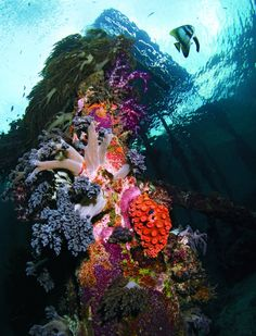☆ The soft corals of Raja Amat's Arborek Jetty are a guaranteed wow.。☆