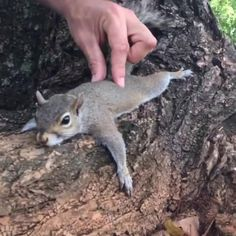 Touch is such a healing and enjoyable part of the human or human/animal connection. Just ask this squirrel. Cute Funny Animals, Cute Baby Animals, Animals And Pets, Cute Dogs, Cute Animals Puppies, Cute Animal Videos, Funny Animal Pictures, Cute Gif, Funny Cute
