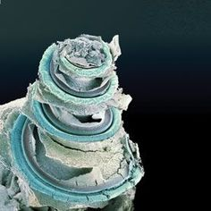 The spiral-shaped organ of Corti, found in the cochlea, houses the sensitive hair cells that convert sound vibrations into nerve impulses. These signals then travel along the auditory nerve to the brain.