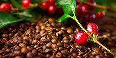 ☕ Ξέρετε πως παράγεται ο στιγμιαίος καφές; Δείτε την παραγωγική του διαδικασία!