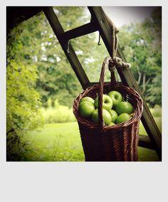 Harvest Orchard Basket...