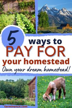 Are you wondering how to finance a homestead? Planning a homestead can take years, but knowing how to finance and own a homestead shouldn't take that long. You can look into homestead owner financing, homestead financial mortgages, usda homestead grants, and homestead loans to start a homestead. Get your finances ready to homestead so that you can afford the homestead of your dreams today! Homestead Farm, Homestead Survival, Survival Tips, Backyard Layout, Farm Business, Modern Homesteading, Hobby Farms, Chickens Backyard, Sustainable Living