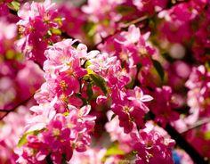 Flower or Tree?? by Corbin  Elliott on 500px.
