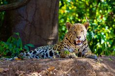 leopard backround - Full HD Wallpapers, Photos, 2000x1333 (684 kB)