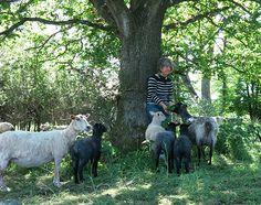 Gröna lammet gården där vi köper in vårt lammkött ifrån.