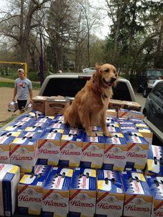 Grand Prix Guard Dog. TFM.