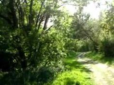 Weg zum Marchfeldkanal & derselbe. - Felder, Country Roads, World, Youtube, The World, Youtubers, Youtube Movies