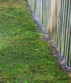 Moss line