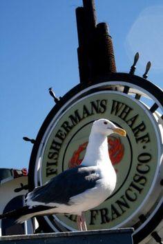 Seagull  I want one so bad!