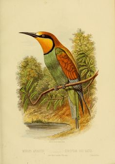 """https://flic.kr/p/e38nBR   n114_w1150   Cassell's book of birds :. London,Cassell, Petter and Galpin,[1875?]. <a href=""""http://biodiversitylibrary.org/page/33755811"""" rel=""""nofollow"""">biodiversitylibrary.org/page/33755811</a>"""