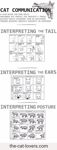 Cat Behavior #catbehaviorsigns
