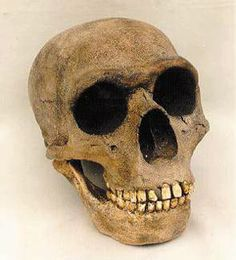 Neanderthal | Unravelling the DNA of our ancient relatives