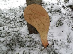 löven för all träd Leaves, Snow, Outdoor, Outdoors, Outdoor Games, The Great Outdoors, Eyes, Let It Snow