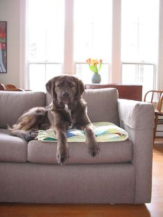 desire to inspire - desiretoinspire.net - Monday's pets on furniture - part 2