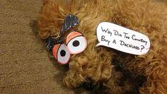Pet news 펫뉴스, 아이들의 손재주로 만화화 된 졸린 강아지!
