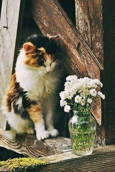 a2f1bea95c908 Animais De Estimação, Animais Fofos, Gatinha Manhosa, Ilustrações De Gato,  Gatos Engraçados