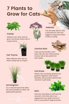 Cat Safe Plants, Cat Plants, Houseplants Safe For Cats, Cat Friendly Plants, Cat Friendly Home, Crazy Cat Lady, Crazy Cats, Cat Garden, Cat Enclosure