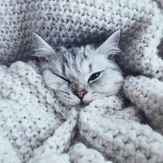 cozy little cat
