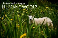Is it possible to enjoy wool fashion without supporting animal cruelty? Yes, if you make the effort to buy humane wool and wool products from ethical producers. Here I've put together some sources of humane wool to make cruelty-free living easier for you.