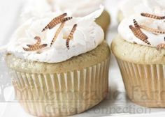 Hedgehog Safe Cupcakes I can make fir Howie's first birthday! Hedgehog Treats, Hedgehog Food, Hedgehog Care, Pygmy Hedgehog, Hedgehog House, Baby Hedgehog, Pet Treats, Hedgehog Supplies, Animal Cupcakes